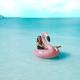 Flamant Rose Perle bouée géante gonflable bec Jaune